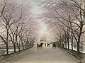 Cherry blossoms at Akasaka, Tokyo in the 1890s, Digital ID- 109995. 189-? (3097262384) (cropped).jpg