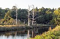 Chincoteague NWR VA1.jpg