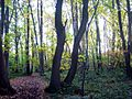 Chislehurst Common Woods.jpg