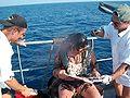 Chrzest morski 18.JPG
