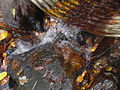 Close up of outflow of culvert on Kinny Run.JPG
