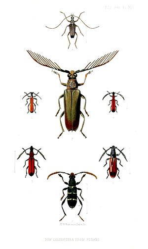 E. W. Robinson - Longhorn beetles from Penang: Proceedings of the Zoological Society of London vol. 1866, plate XLII