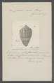 Conus mus - - Print - Iconographia Zoologica - Special Collections University of Amsterdam - UBAINV0274 086 05 0002.tif