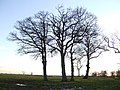 Copse at sunset - geograph.org.uk - 321165.jpg