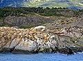 Cormorant Island Patagonia.jpg