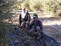 Cosecha del olivo en el Departamento Pomán.jpg