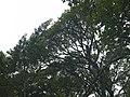 CostaRica (6164311741).jpg