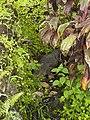 Costa Rica (6109818319).jpg