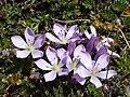 Cotopaxi Nationalpark Ecuador109.JPG