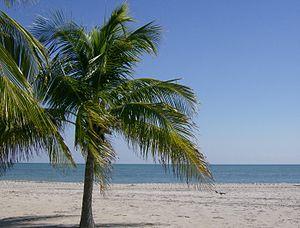 Crandon Park - Image: Crandon Park beach, FL