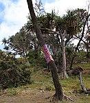 Crocheted Tree (31247170635).jpg
