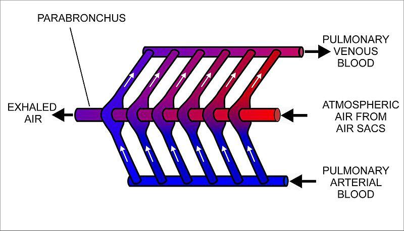 Cross-current exchanger.jpg