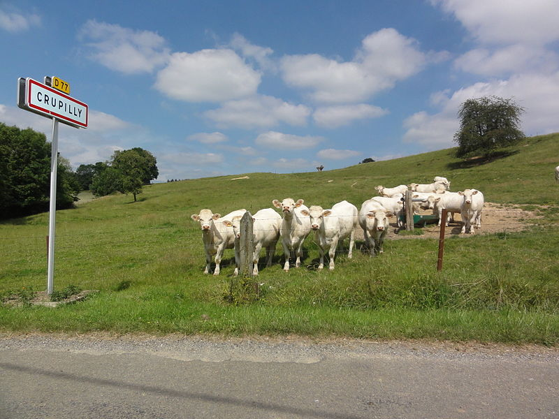 Crupilly (Aisne) city limit sign and cows