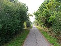 Cuckoo Trail between Polegate and Hailsham - geograph.org.uk - 62562.jpg