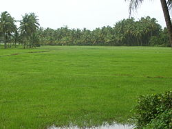 Monsoon scene of rural Dakshina Kannada