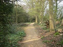 a gravel path through woodland, with low vegetation on each side. To the left leaves cover large shrubs and bushes, a row of bare tree trunks and branches are close to the right.