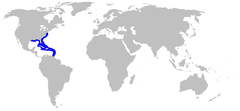 Range of the bluntnose stingray
