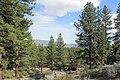 Davis Creek Park - panoramio (28).jpg