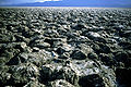 Death Valley,19820817,Devil's Golf Course.jpg