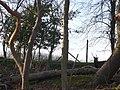 Deer in the woods - geograph.org.uk - 732915.jpg