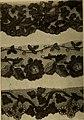 Dentelles et guipures - anciennes et modernes, imitations ou copies. Varieté des genres et des points. 52 portraits documentaires, 249 échantillons de dentelles, collerettes, fraises, manchettes, (14798252853).jpg