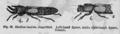 Descent of Man - Burt 1874 - Fig 23.png