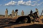 Desert Defender 140626-F-II211-578.jpg