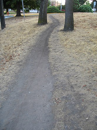 Desire path - A typical desire path