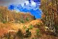 Detweiler Run Natural Area (Revisited) (2) (10544618536).jpg