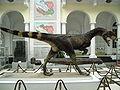 Dilophosaurus wetherilli 3.jpg