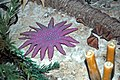 Diorama of a Carboniferous seafloor - starfish & brachiopods (44881349514).jpg