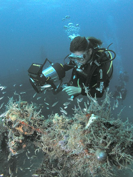Diver and fish, MV River Taw wreck, St. Kitts