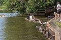 DogsSwimmingATMarymoorPark.jpg