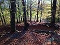 Doline in Steilstufe des Muschelkalks zwischen Bad Berka und Saalborn 10.jpg