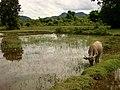 Don Det Island - Laos 01 (3773920131).jpg