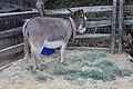 Donkey (27732489174).jpg