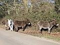 Donkeys near Hyde - geograph.org.uk - 1111539.jpg