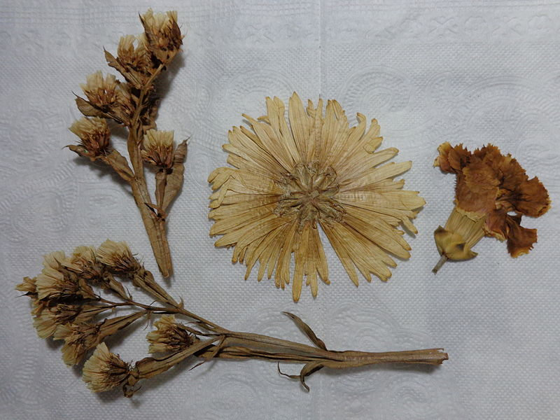 File:Dried flowers.JPG