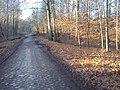 Droga leśna - panoramio (4).jpg