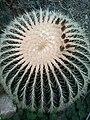 Drum Cactus.jpg