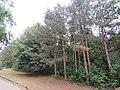 Drvece u parku (11).jpg