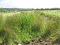 Dry drainage ditch on Walton Moor - geograph.org.uk - 1361248.jpg