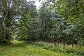 Dubrava Ščomyslickaja natural monument (Belarus) p11.jpg
