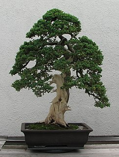 Deadwood bonsai techniques