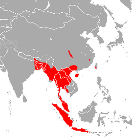 East Asian Tailless Leaf-nosed Bat area.png