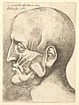 Ecorche head of a man in profile to left MET DP823723.jpg