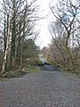 Edge of the forest - geograph.org.uk - 761051.jpg