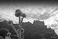 Edinburgh Castle with thistle.jpg