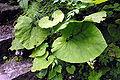 Eisenkappel Troegern Klamm Vegetation 27072008 39.jpg