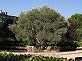 El Parque del Olivo - Zona Petanca (19981086408).jpg